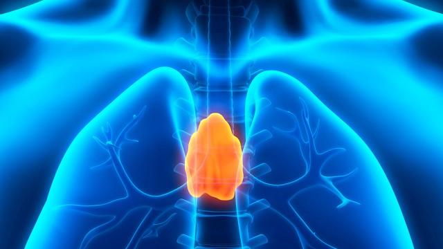 L'effet rajeunissant du thymus